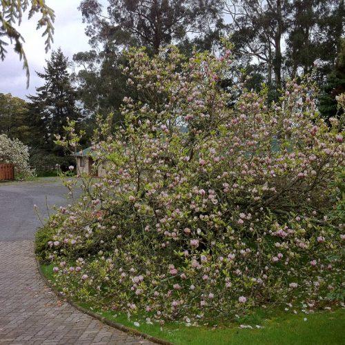 Cabañas Altue Puerto Varas - Nuestro jardin